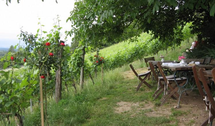 Welschriesling Wijngaard in Oostenrijk