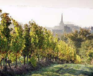 Savennières uit de Loire
