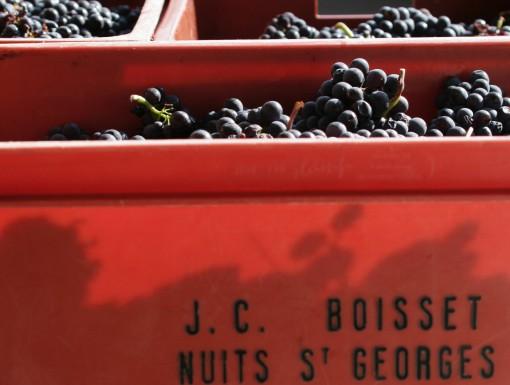Druiven van Boisset