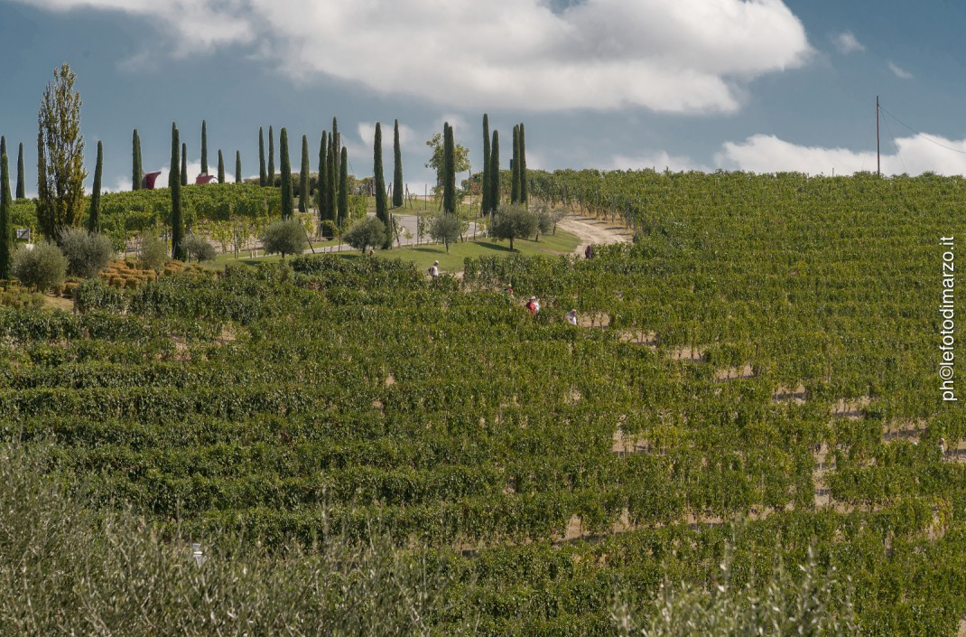 Piëmonte wijngaarden