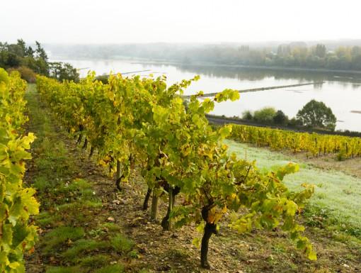 Wijngaarden in de Loire
