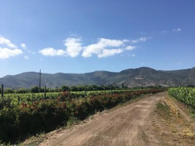Colchagua vallei in Chili