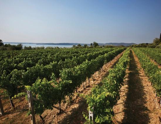 Wijngaard in DOC Lugana