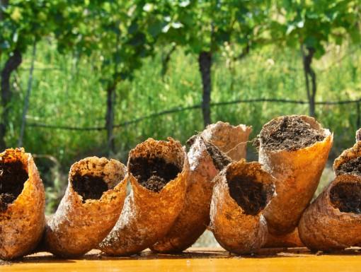 Biologisch-dynamisch wijnmaken bij Alois Lageder