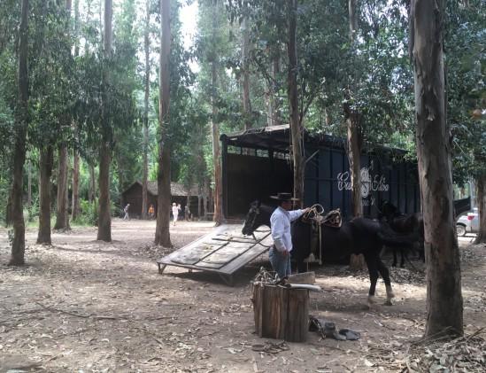 Chileense cowboys van Casa Silva