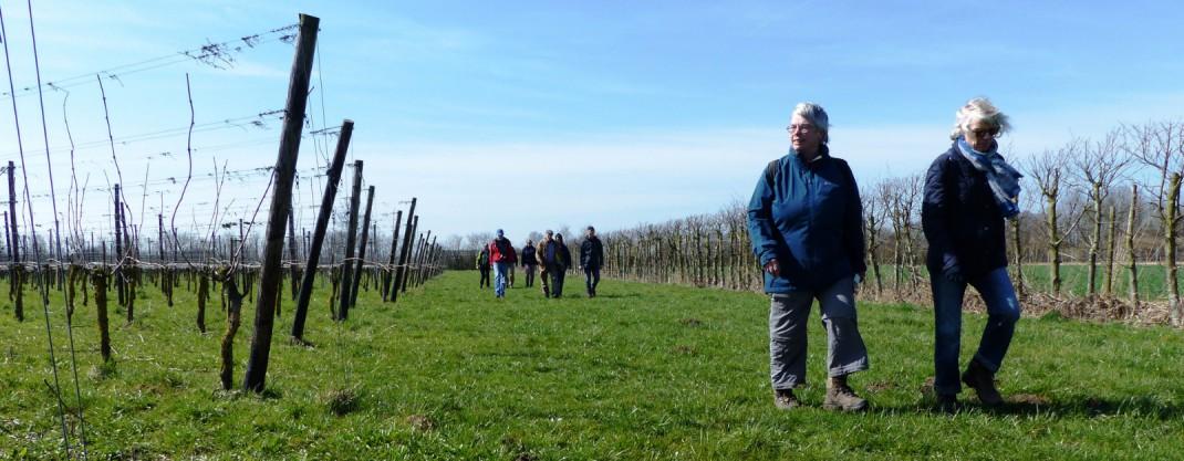 Wandelaars Betuws Wijndomein landscape