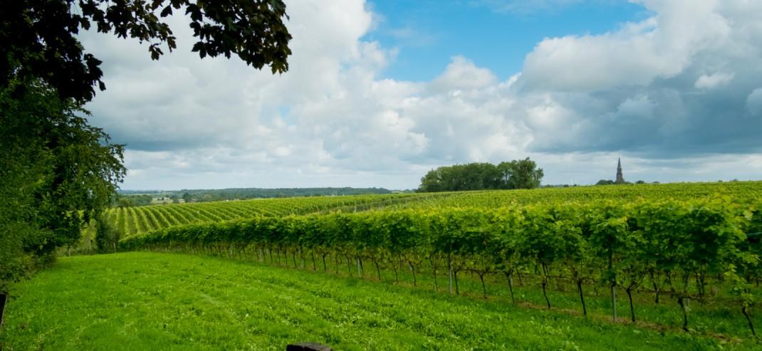Wijngaarden Vijlen in Nederland