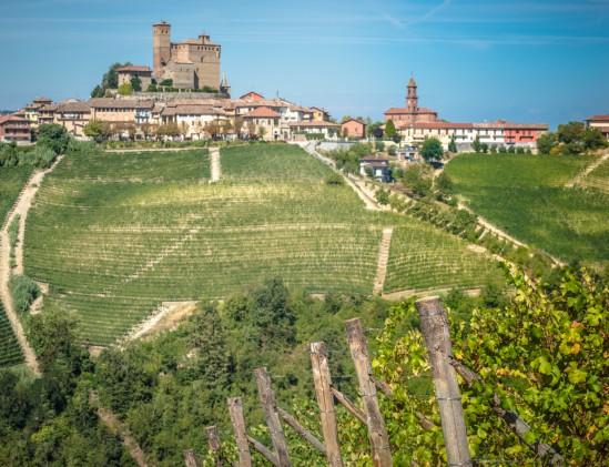 Wijngaard Rivetto in Italië