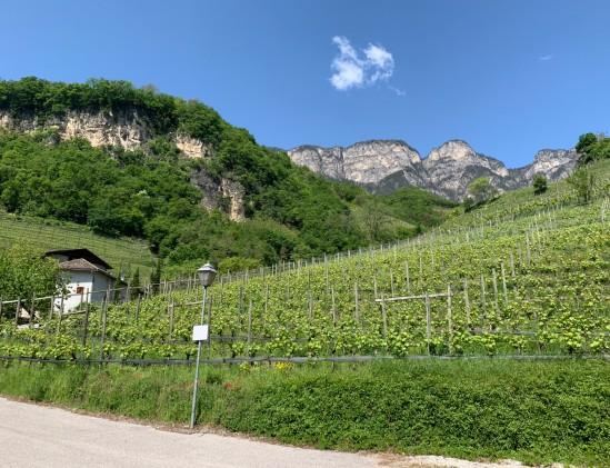 Alto Adige is prachtig, evenals de wijngaarden van Tiefenbrunner