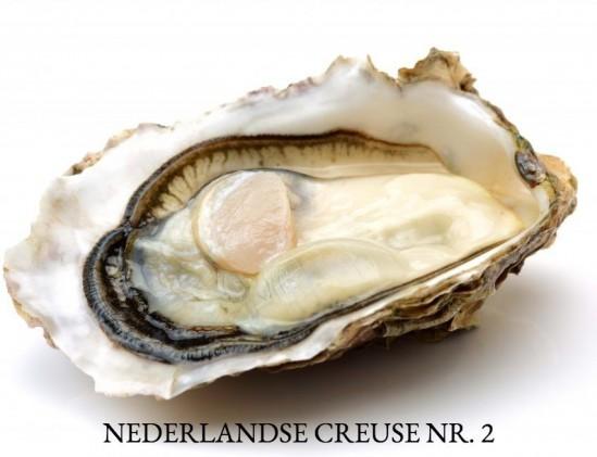 Nederlandse Creuse oester