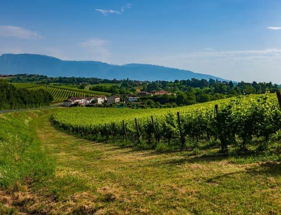 Wijngaarden in de regio Veneto
